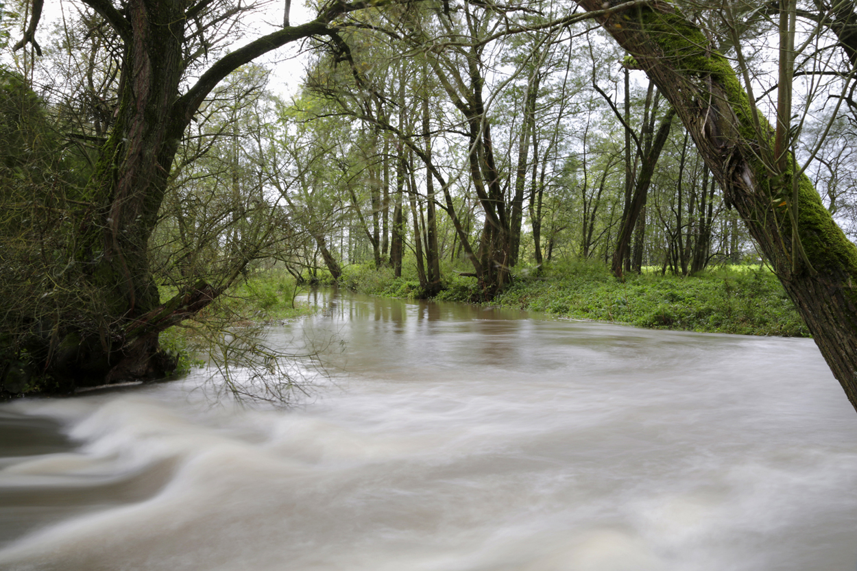 Hochwasser Kleine Laber - ©Ralph Sturm