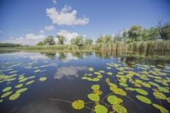 Moorsee mit Teichrosen - ©Ralph Sturm