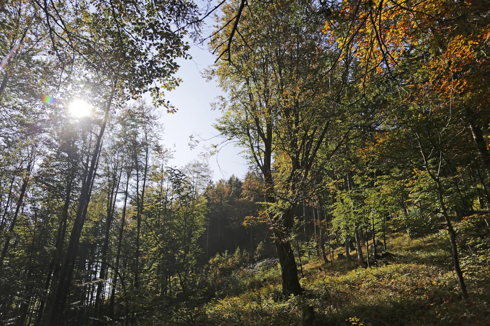Herbstwald - ©Ralph Sturm