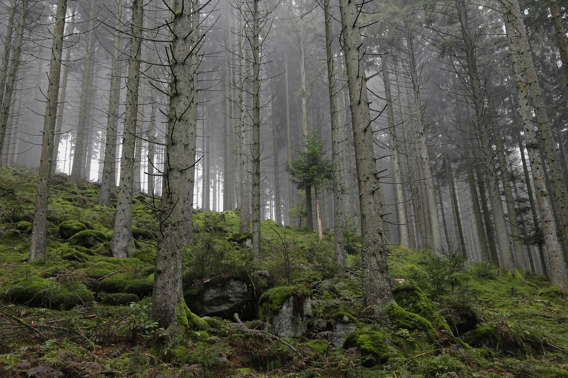 Bergwald im Spätsommer - ©Ralph Sturm